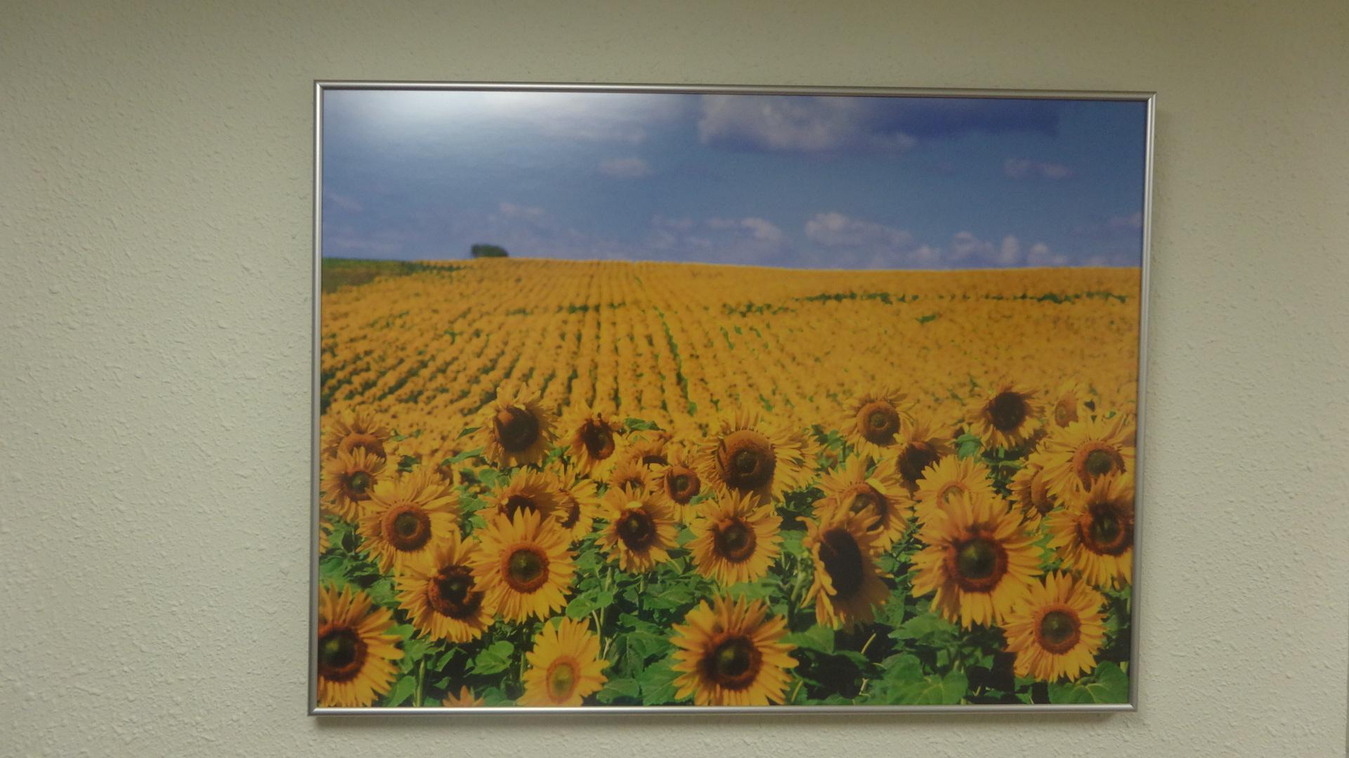 医院の壁に飾られているヒマワリの風景写真