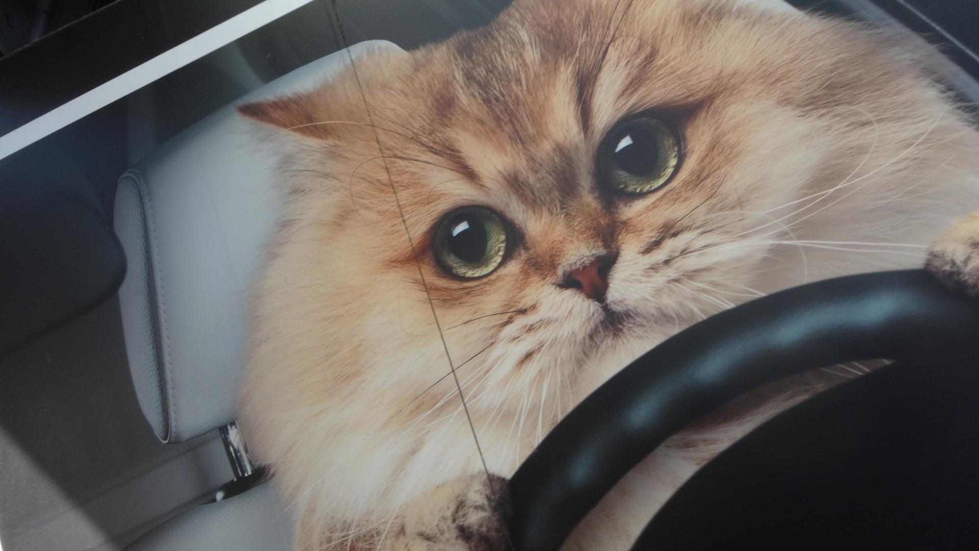 旅で出会ったネコさんたち