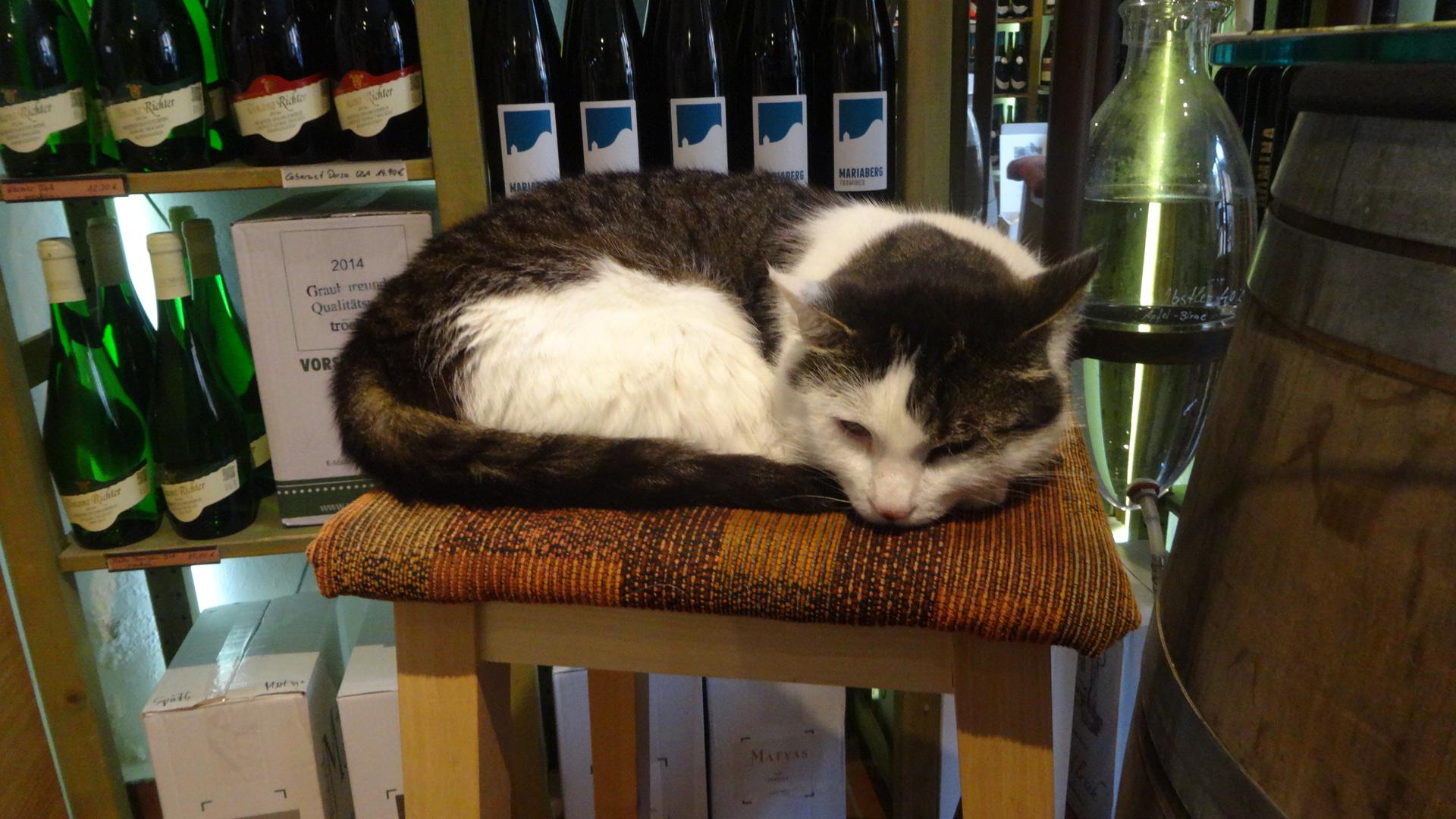 ワイン屋のネコ