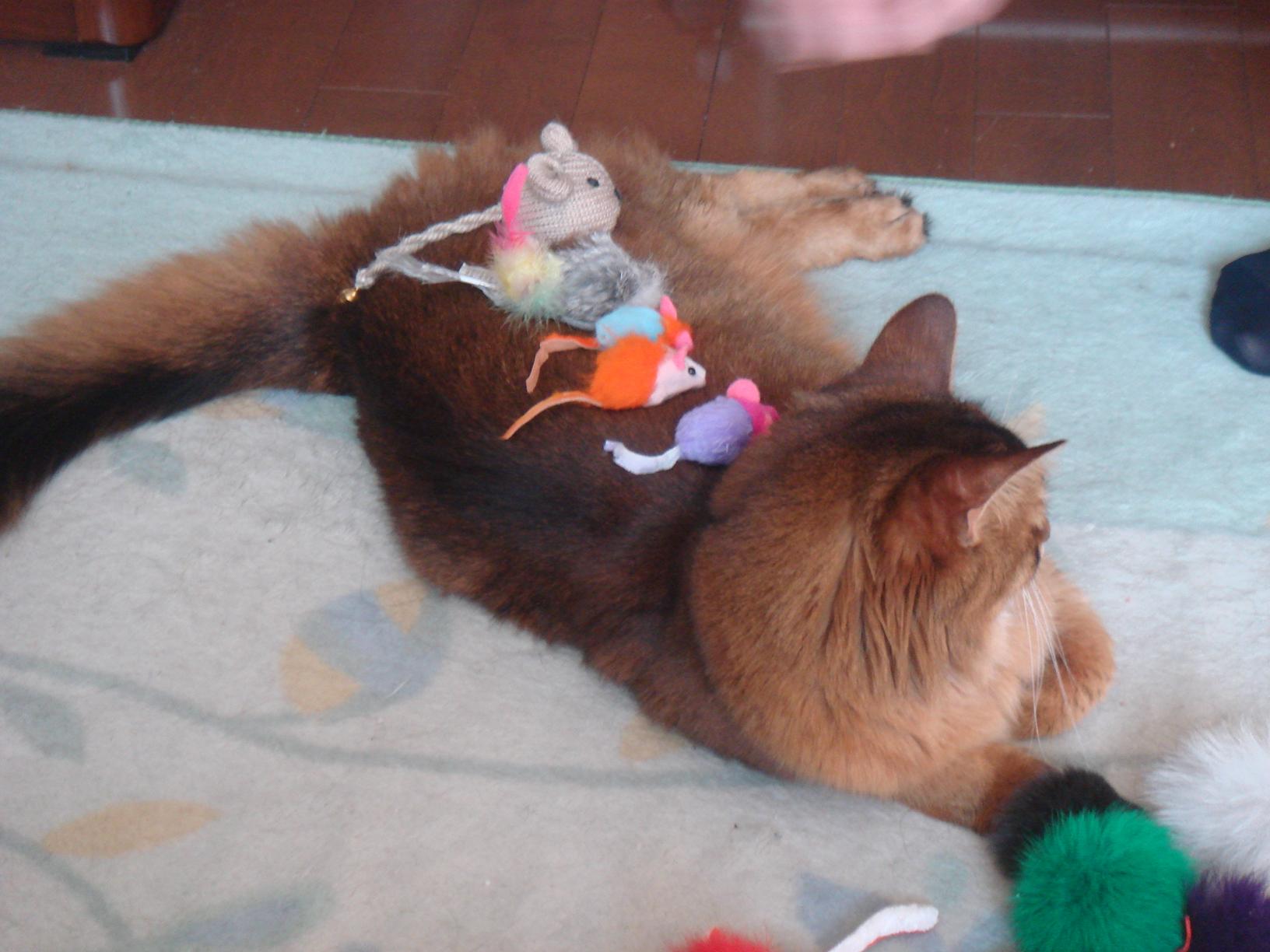 体の上におもちゃを載せられるローズ