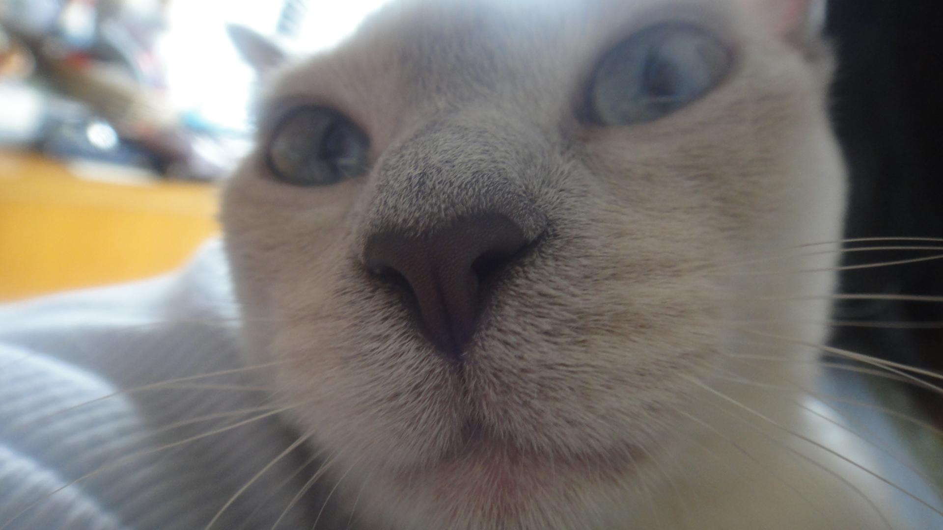 水難救助ネコ・2