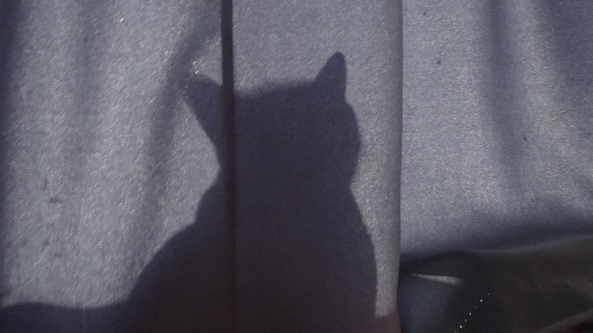 窓際のカーテンの向こうでシルエットを作るデイジー