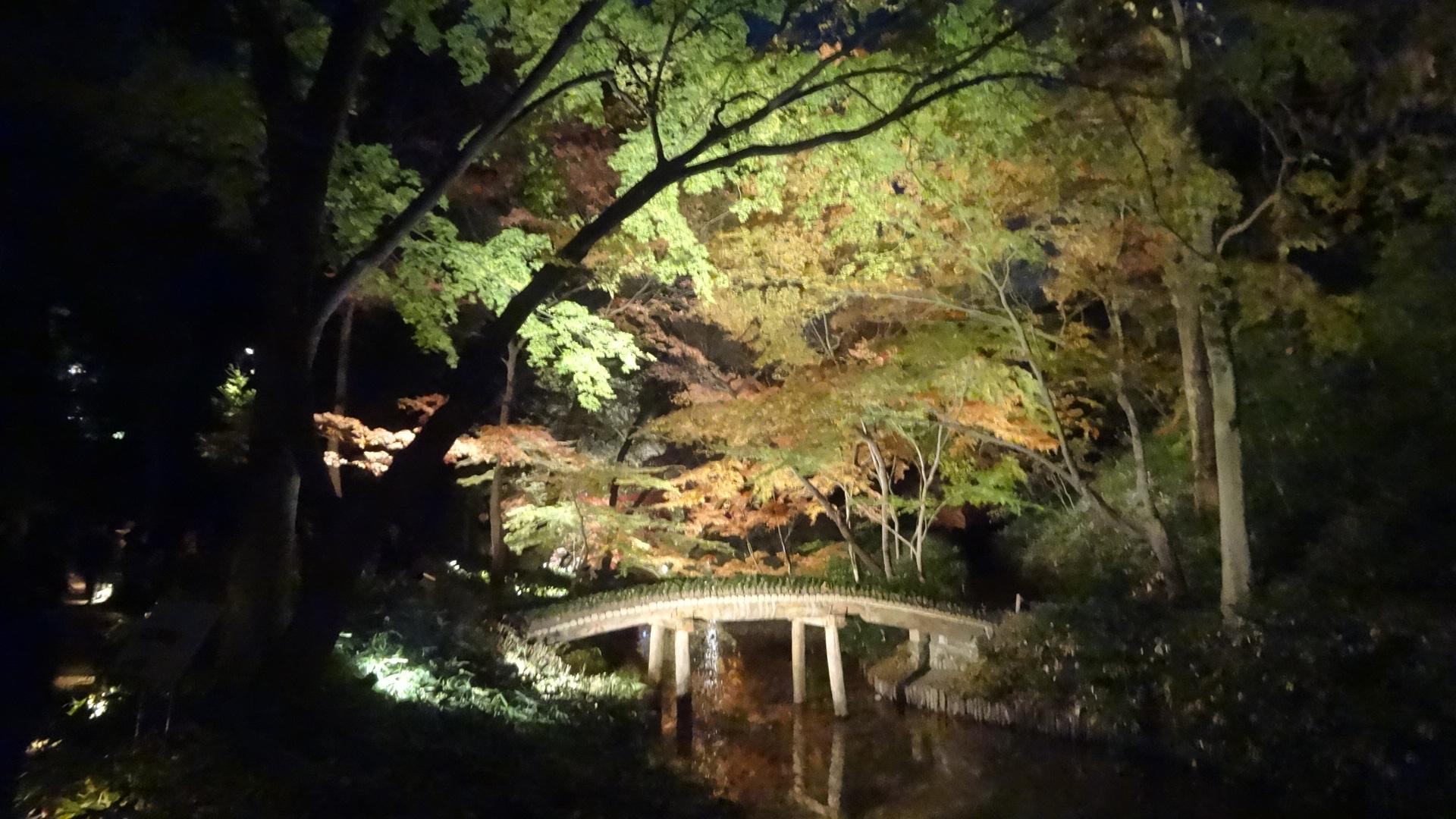 ライトアップされた夜の橋