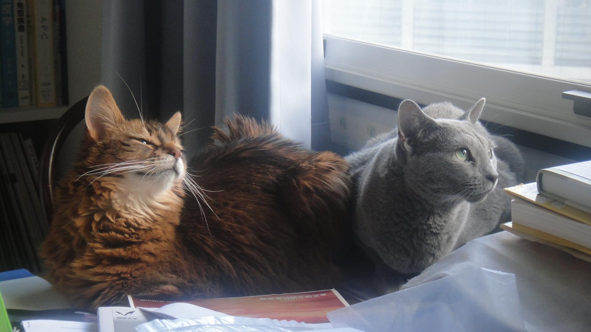 仲良く窓の外を見るローズとデイジー