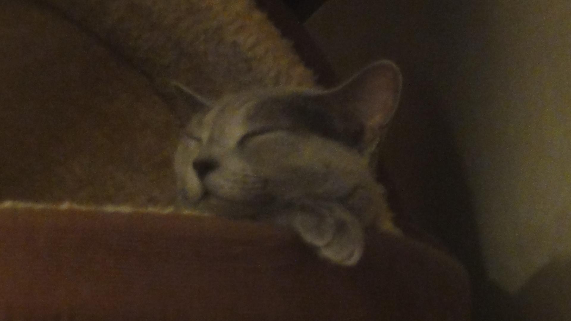ネコ釜で寝るデイジー