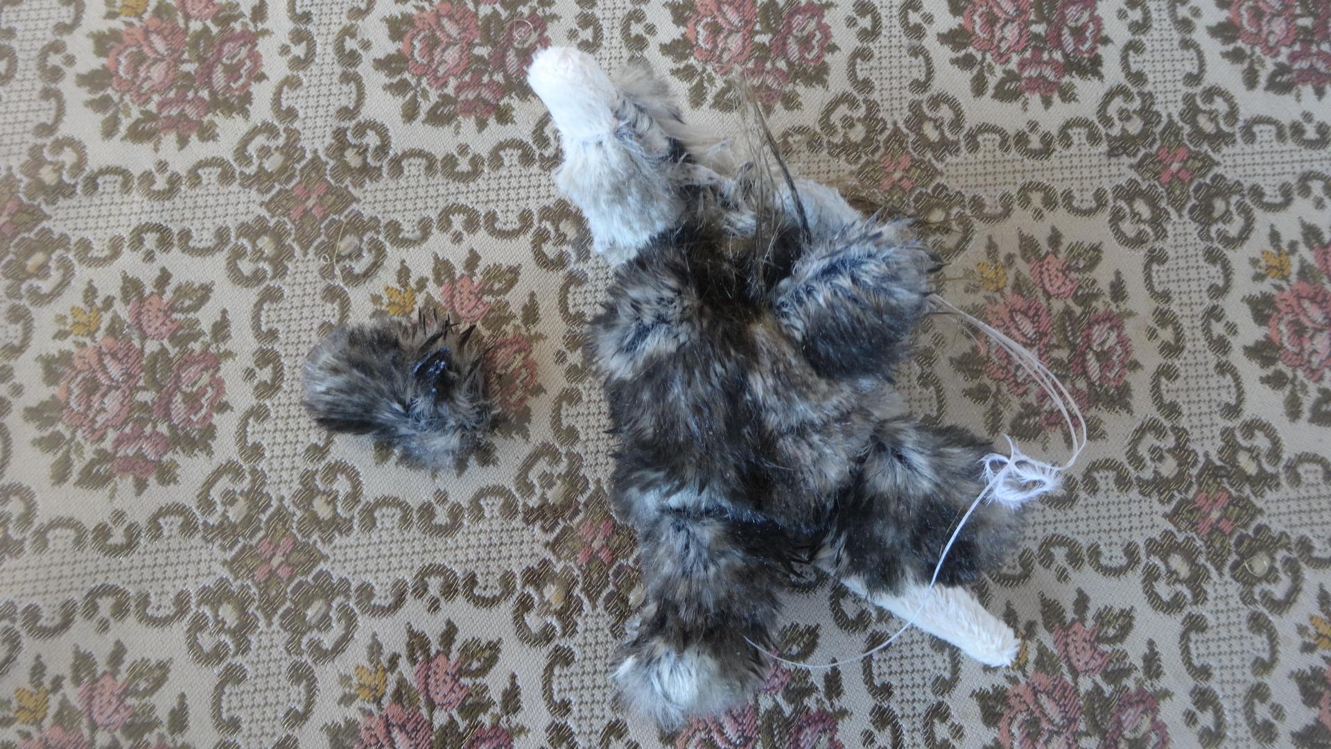 前足がもげたネズミのおもちゃ