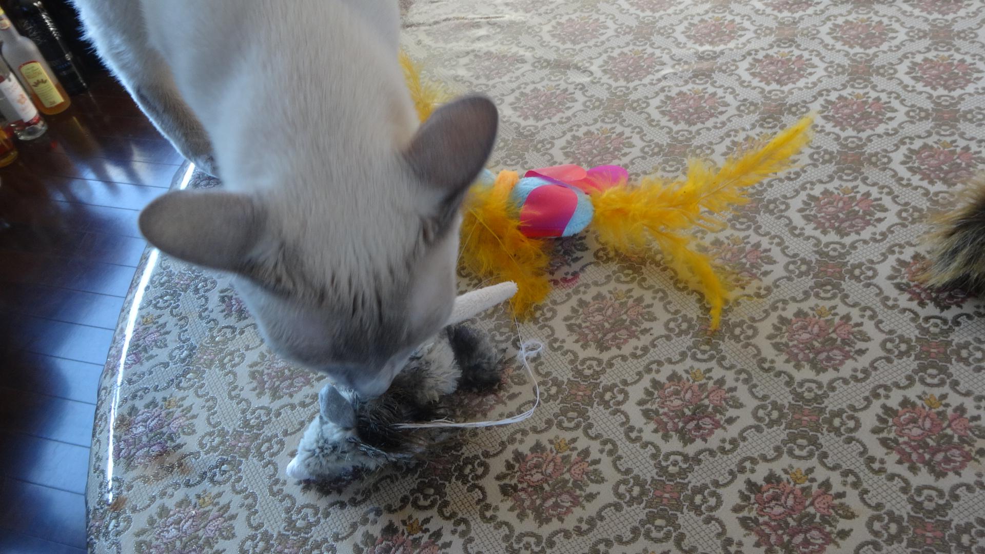 おもちゃに襲い掛かる楓