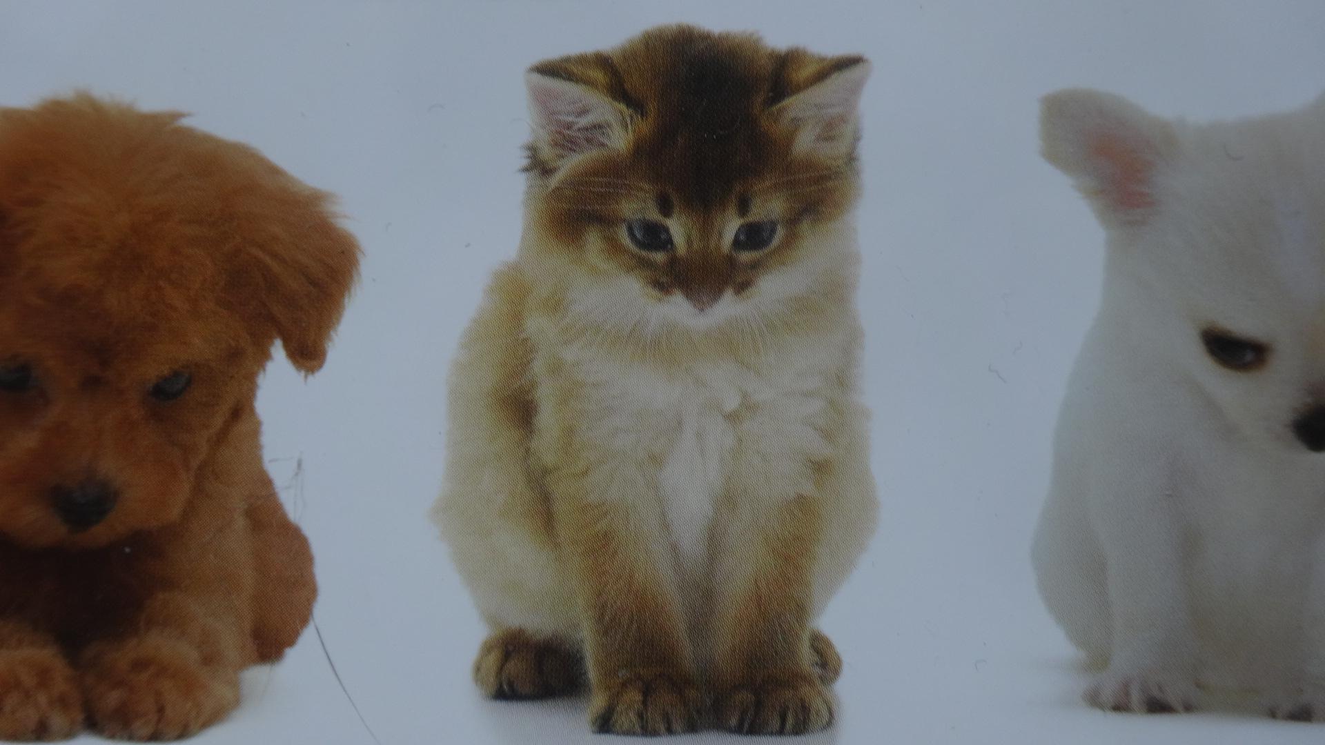 カレンダーに出ているお辞儀するネコの姿2