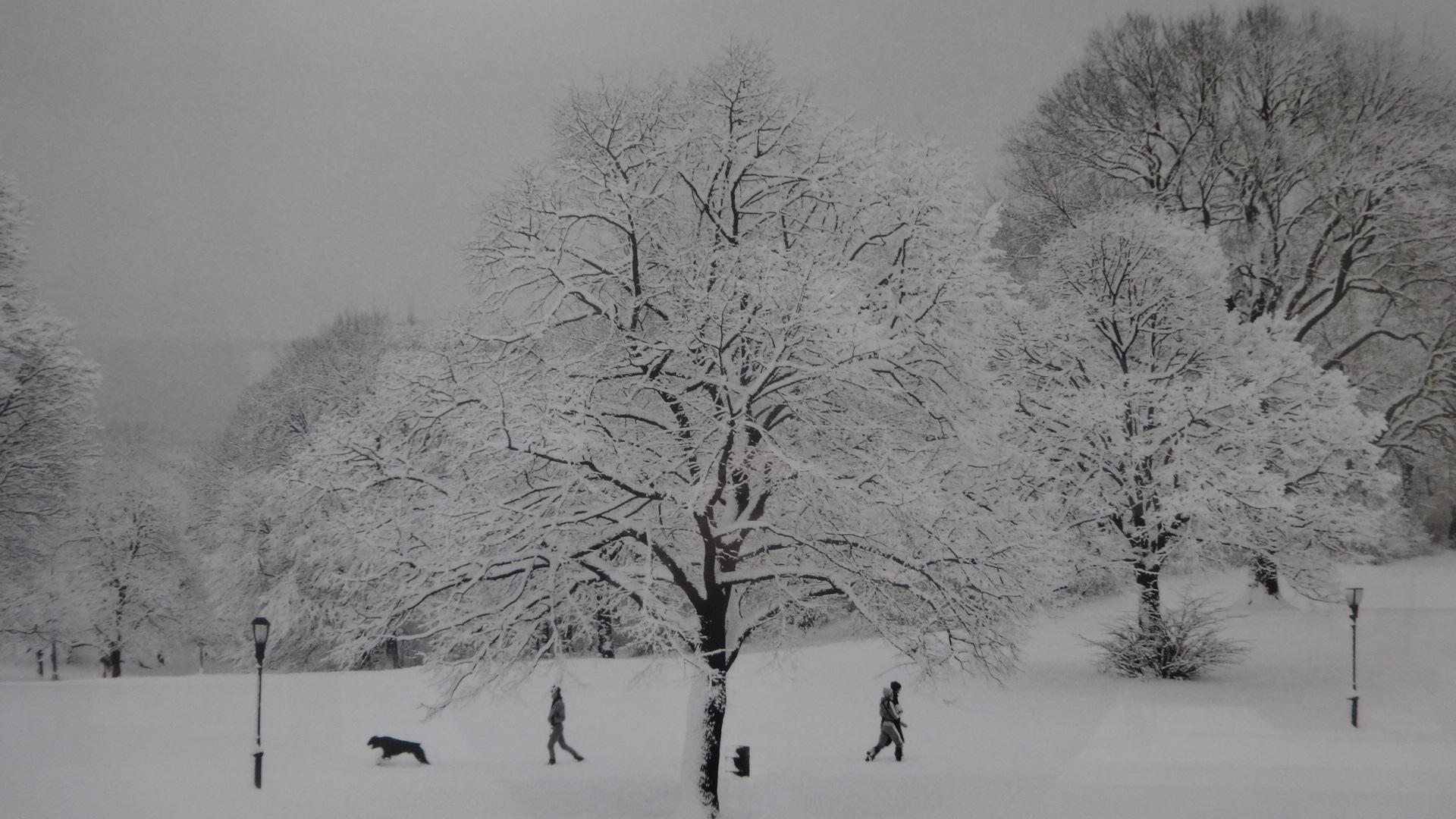 壁に飾られた雪景色の写真