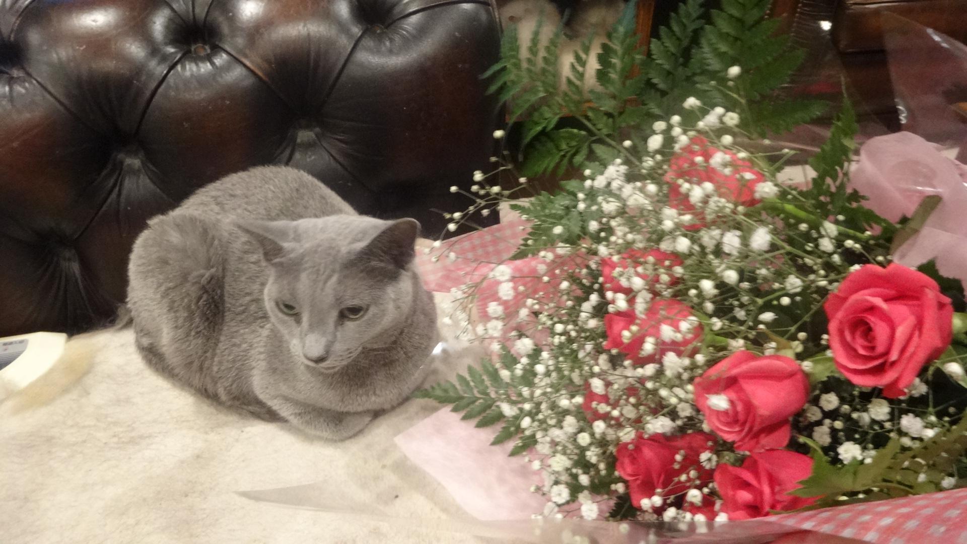 花束のそばに座るデイジー