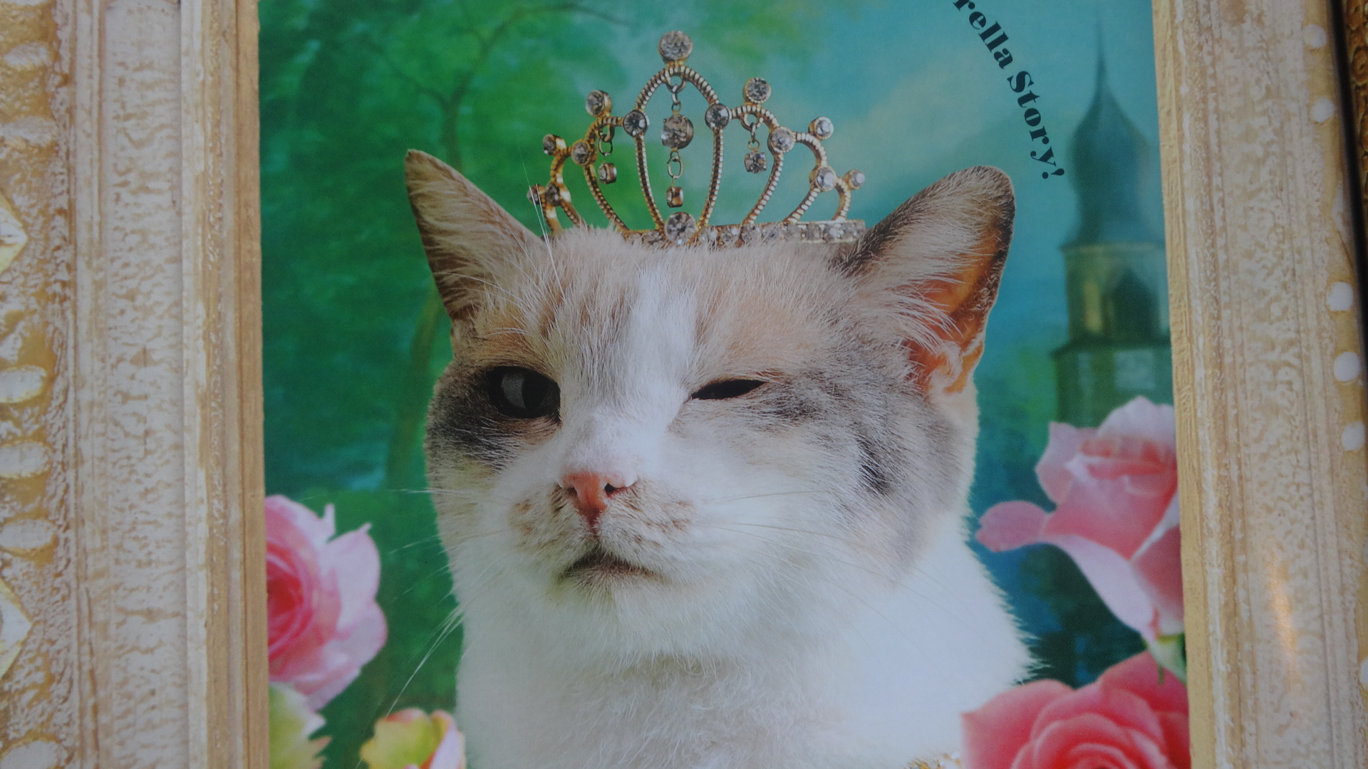 ティアラをのせた女優ネコさまのウインク写真