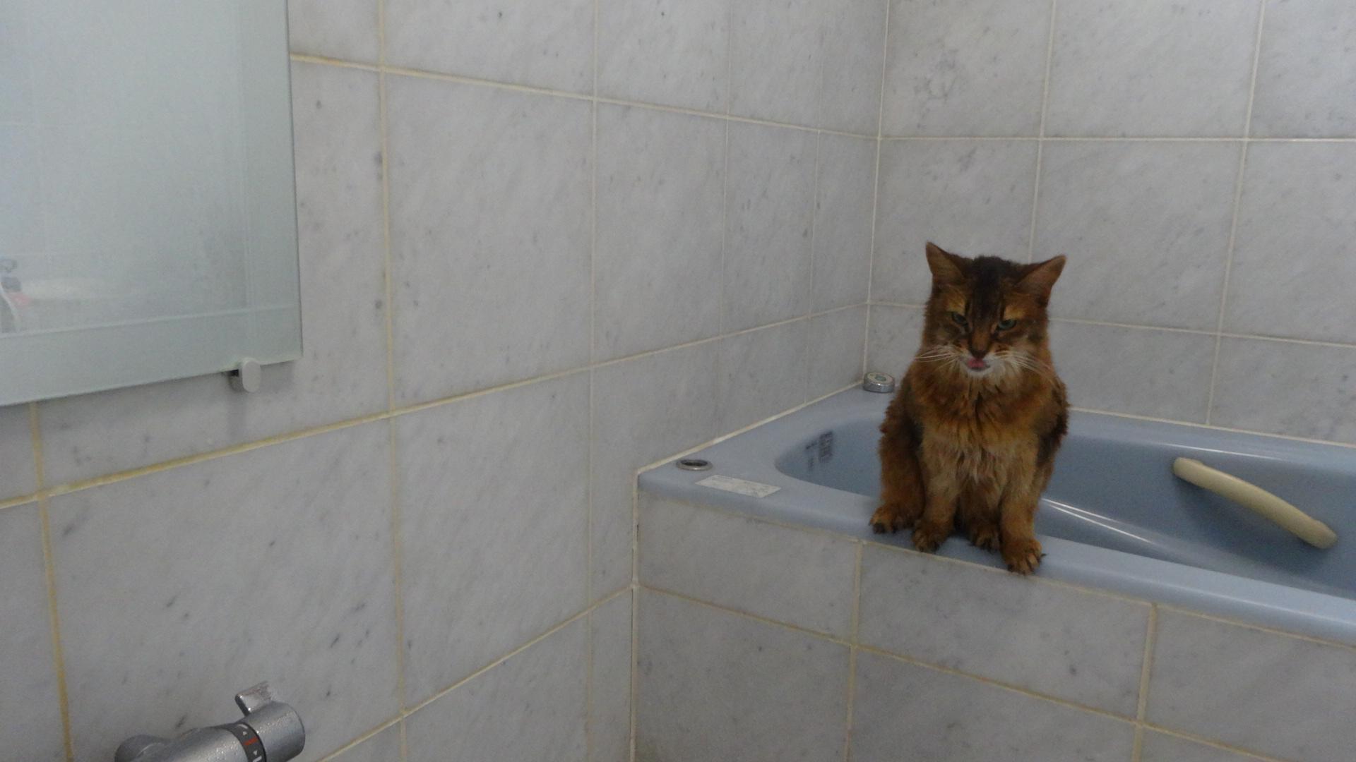 お風呂場で浴槽に座るローズ