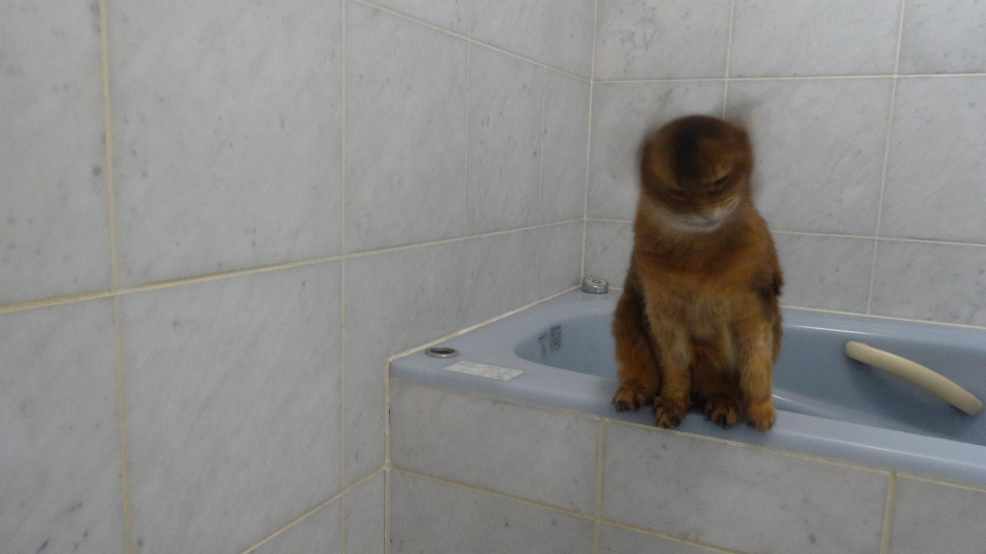 お風呂場で浴槽に座り舌を出すローズ