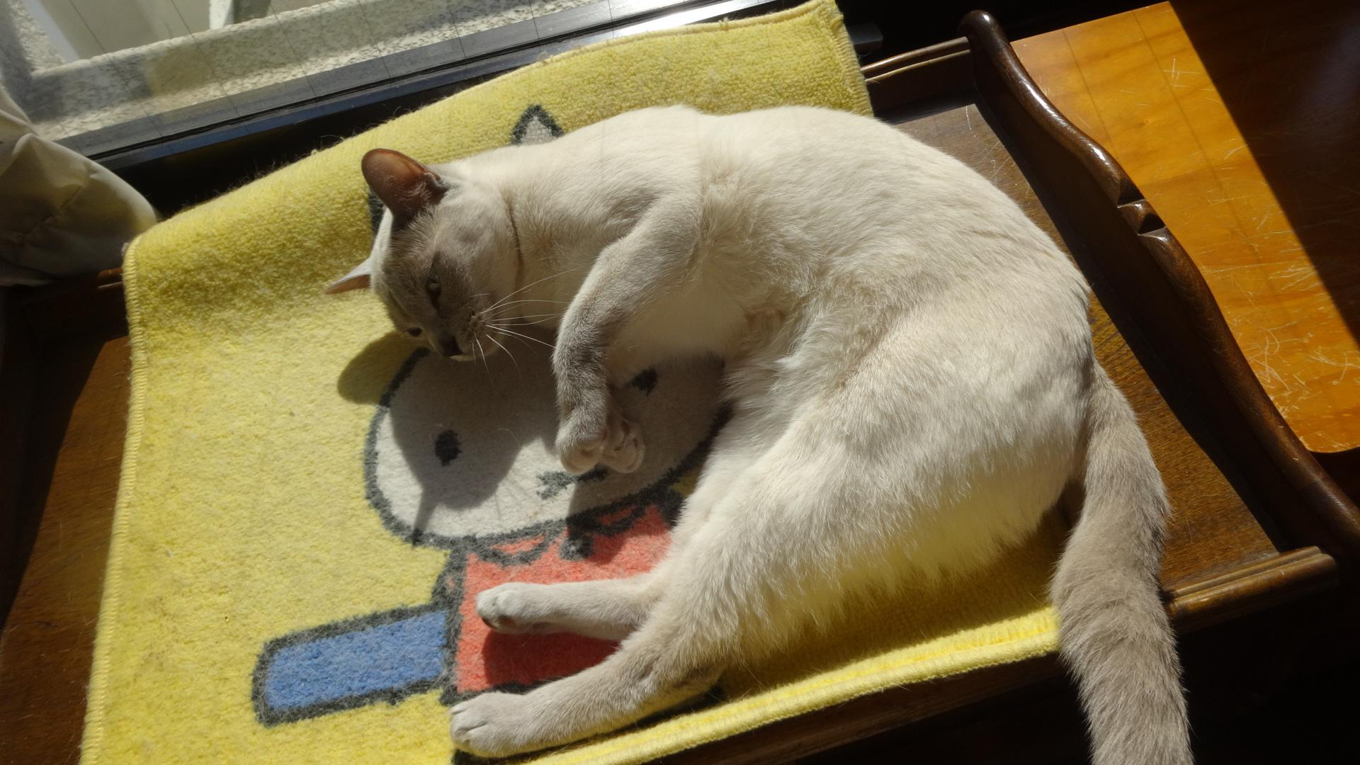 お腹を出して寝る楓