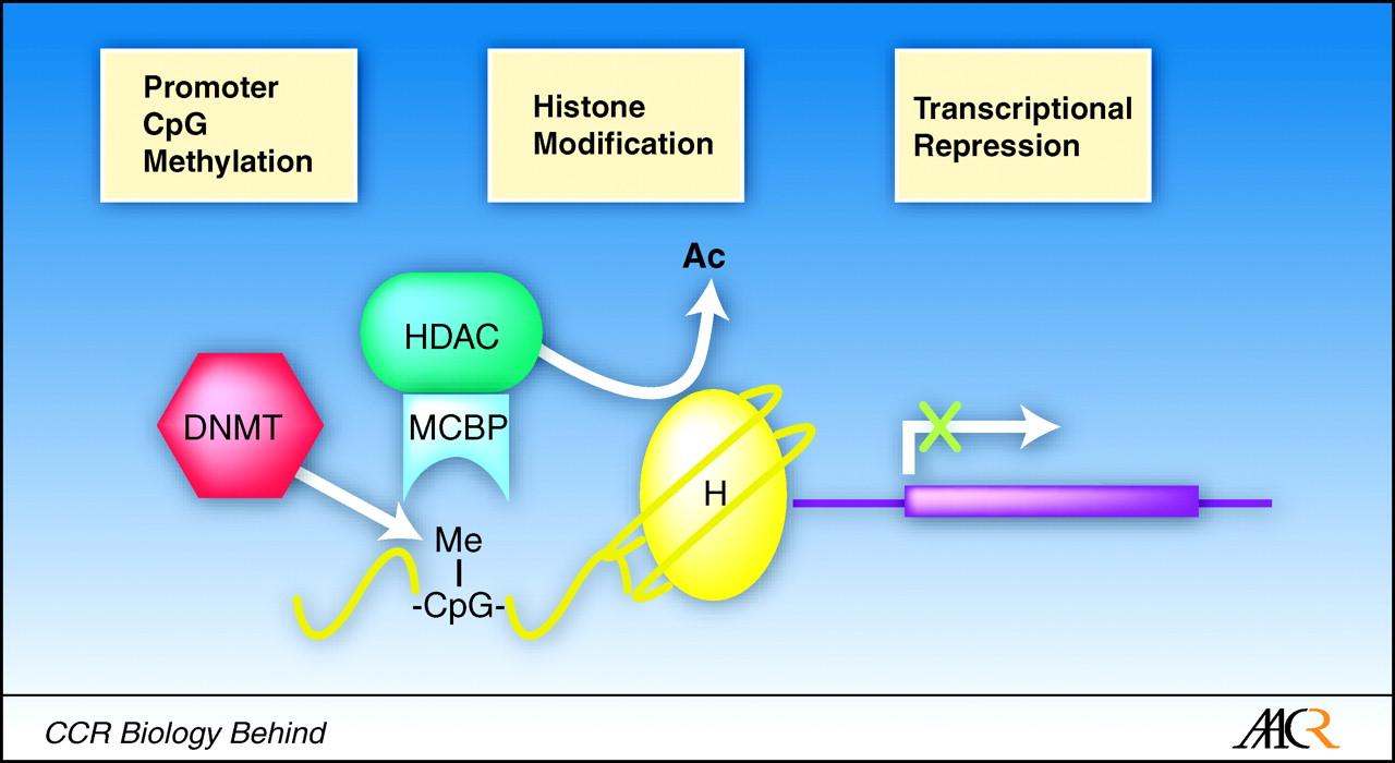 DNAメチル化とヒストン修飾の協調作用