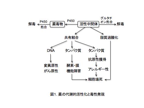 活性代謝物により肝障害が生じる過程の図示