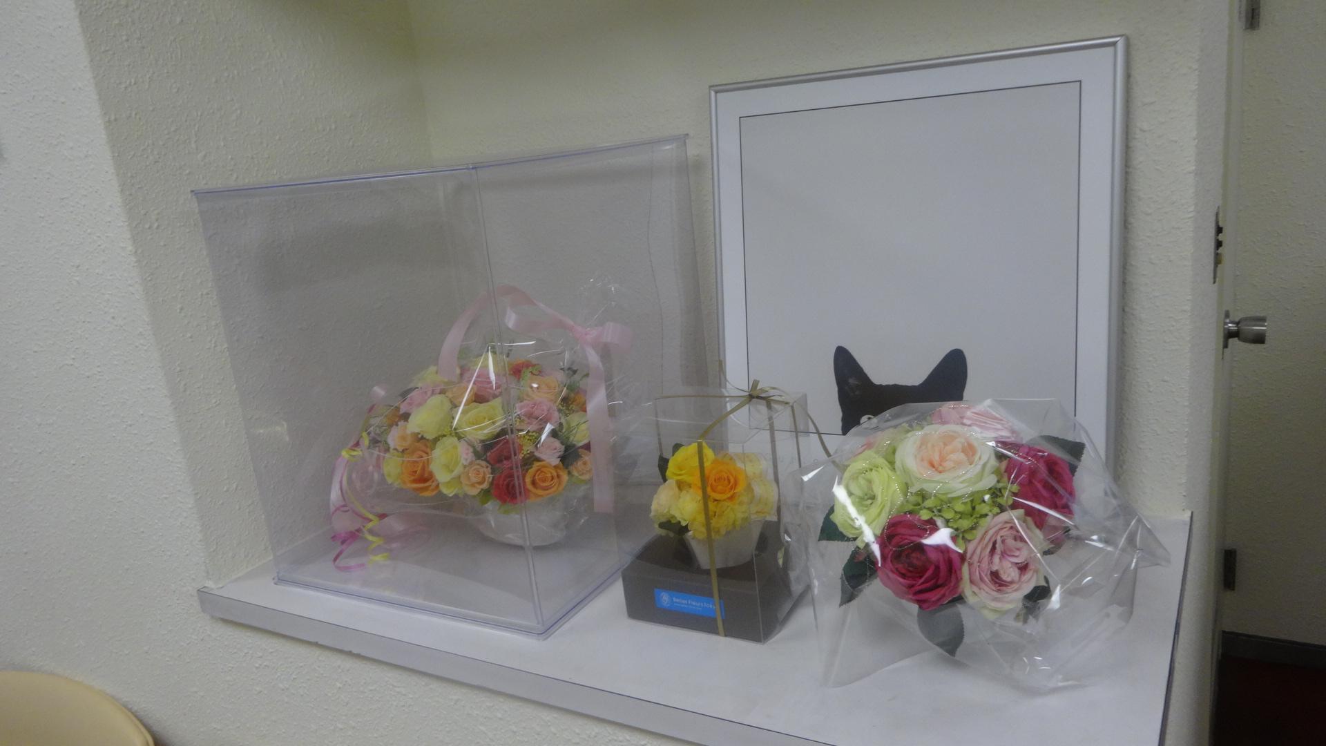 花の後ろに隠れた黒ネコのCuriosity