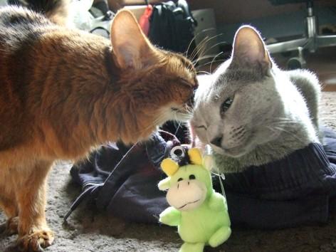 デイジーにキスするローズ