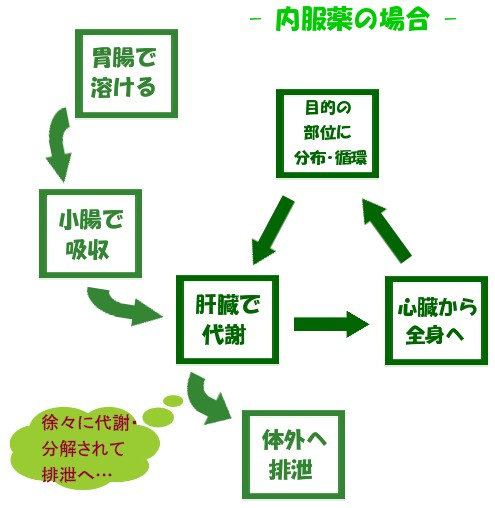 薬物の肝臓など体内での代謝過程の図示