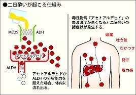 アセトアルデヒドが二日酔い症状を起こすことを説明した図