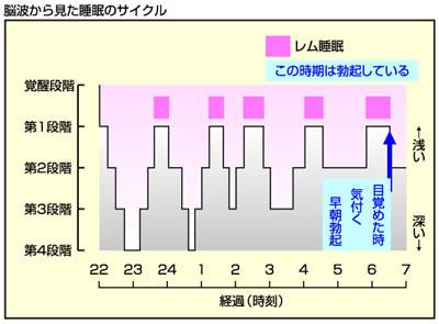 勃起する時期とREM睡眠の関係を示す図