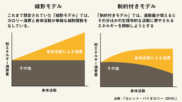 体が減量を抑制しようと反応していることを示唆させるデータを示すグラフ