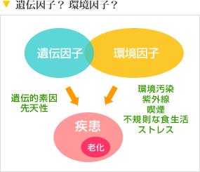 老化への 環境因子 遺伝因子の関与を示した図