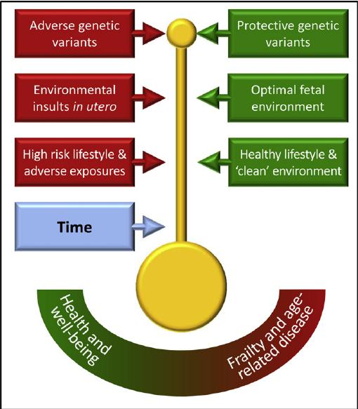 生活習慣 環境を見直すことで老化を遅らせる可能性を示した図