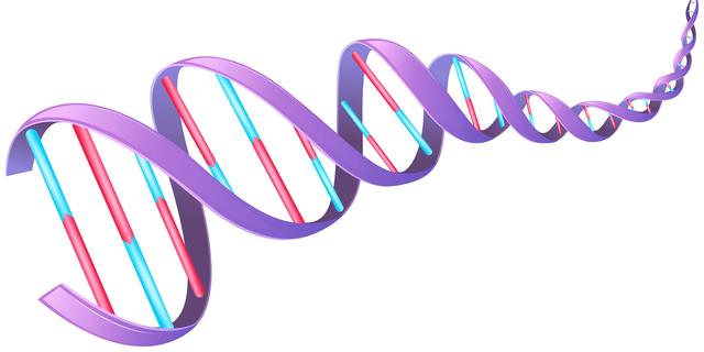 遺伝子の機能や発現の異常と老化の関係を示した図