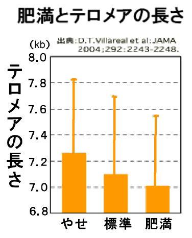 肥満だとテロメア長が短いことを示すグラフ