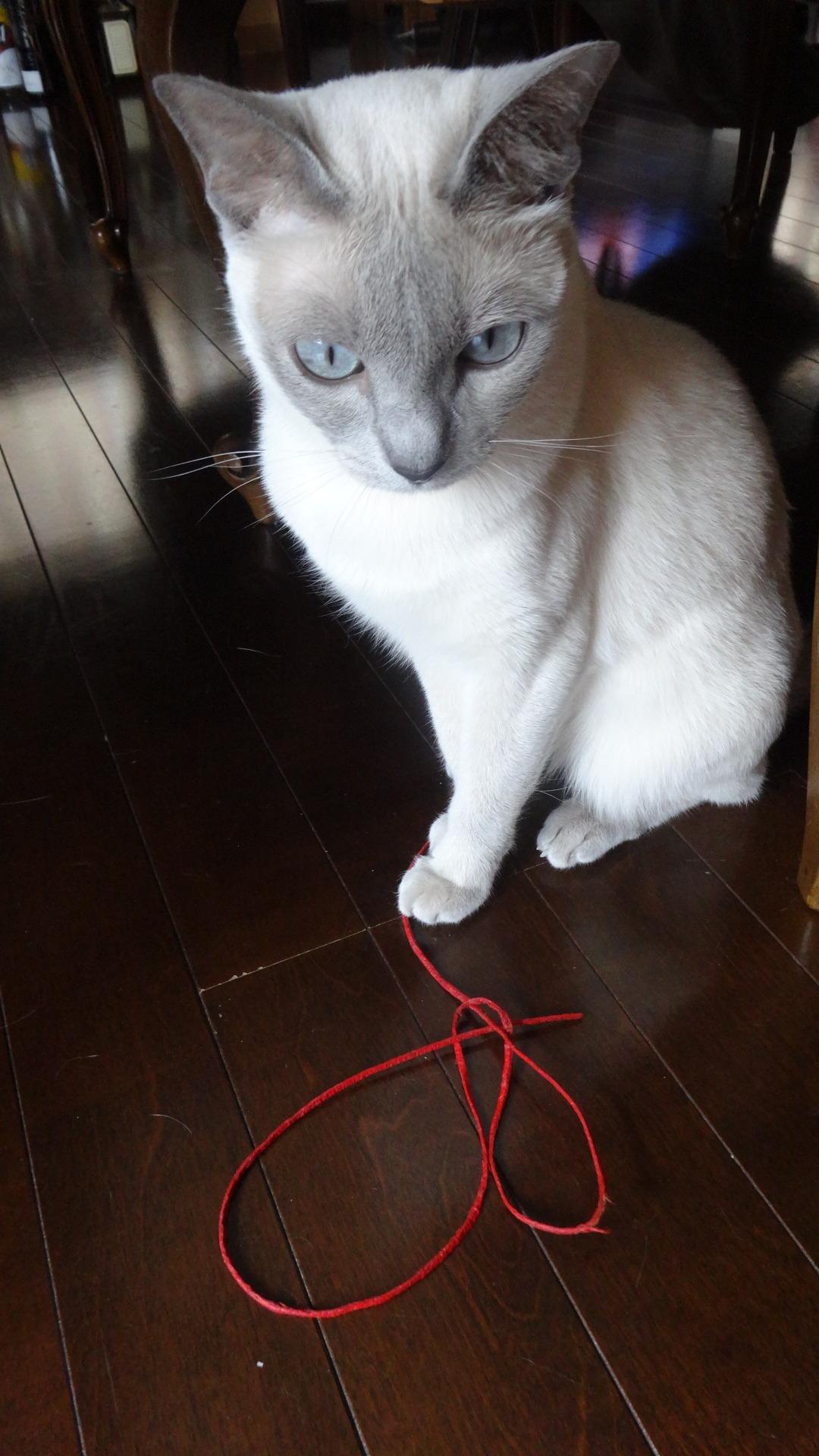 赤い紐を前にして座る楓