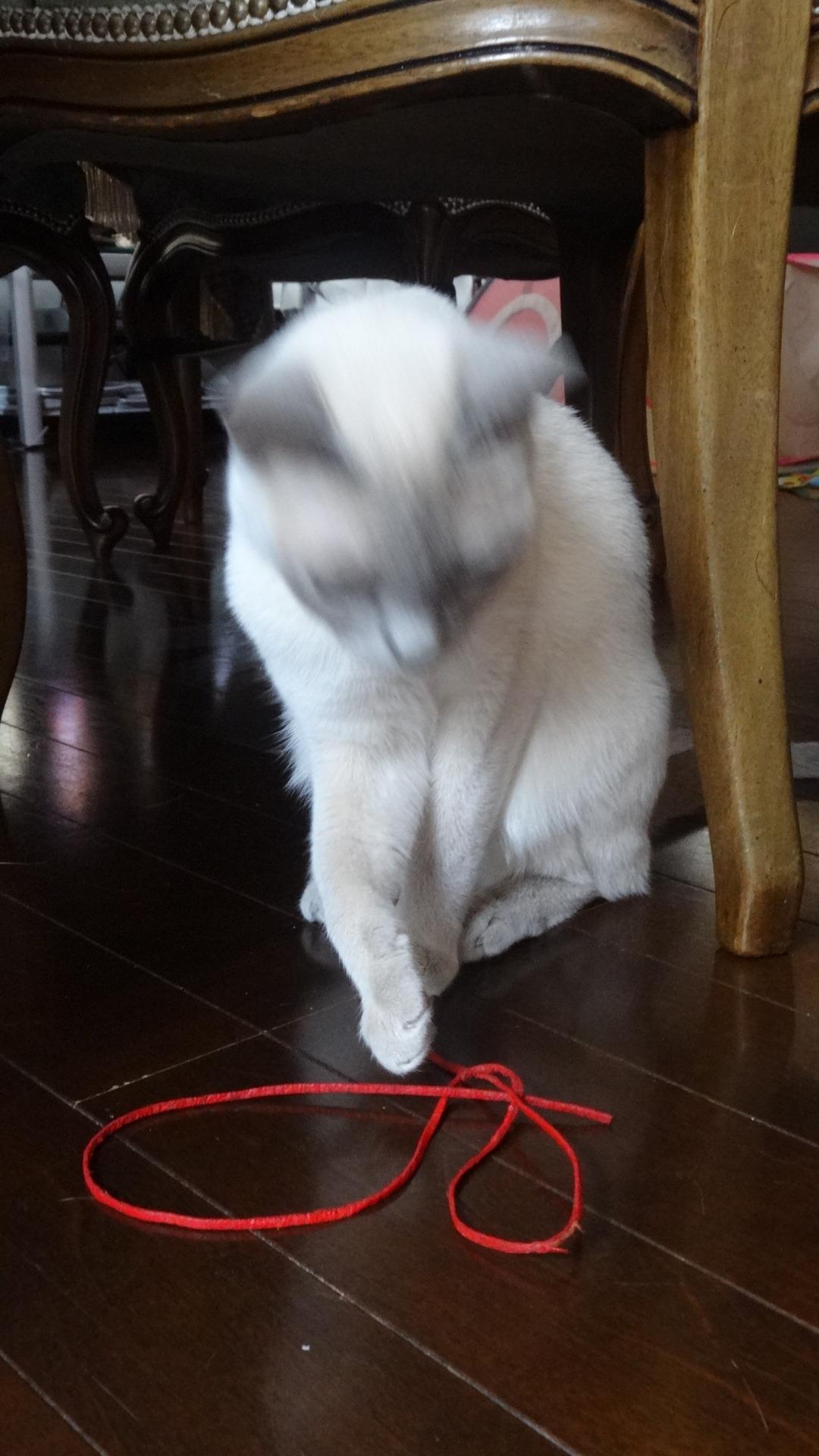 目の前の赤い紐に 手を出す楓