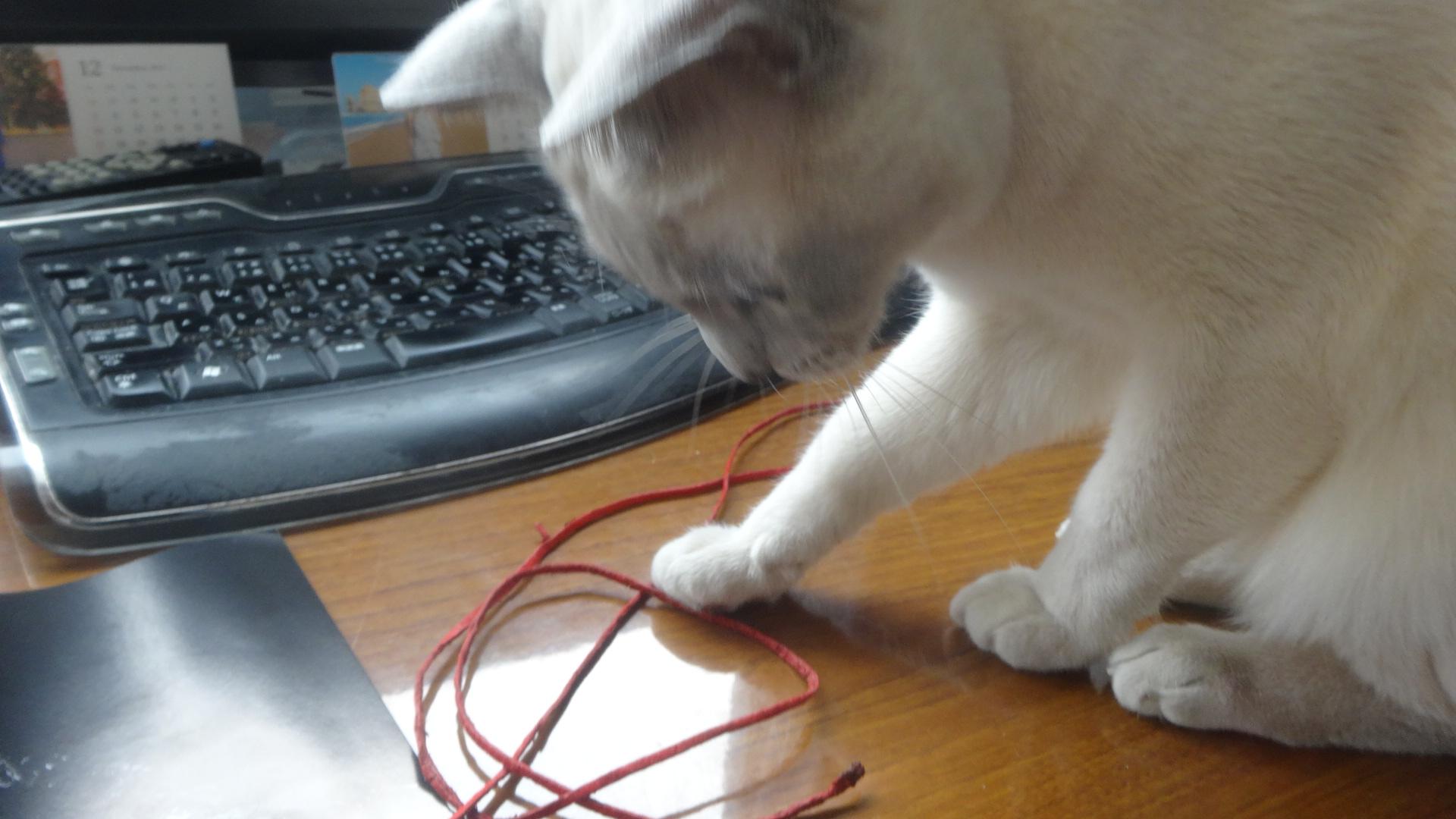 赤い糸を机の上にくわえながらジャンプして持ってきた楓