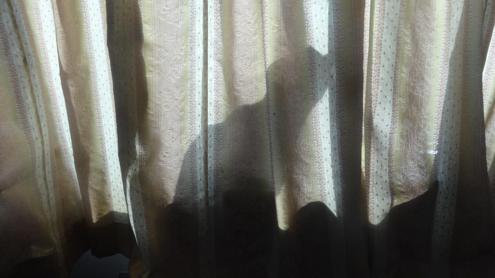 そこに日射しが差し込んでできたシルエット