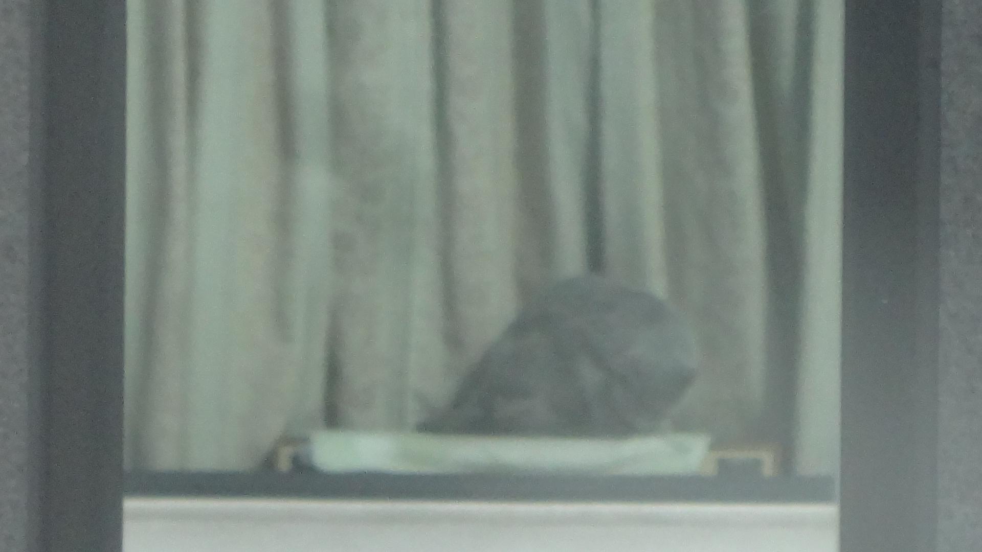 お向いさんのビルの窓に写る日光浴中のデイジー2