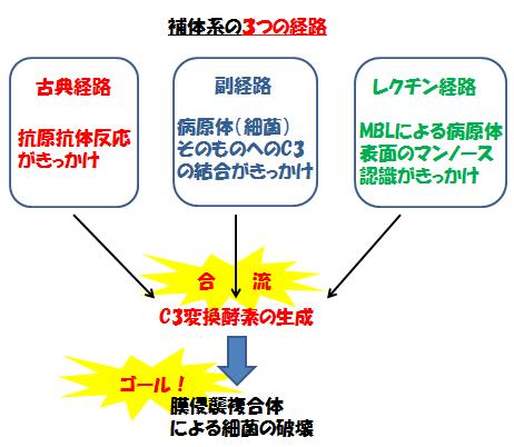 補体の活性化経路をまとめた図2