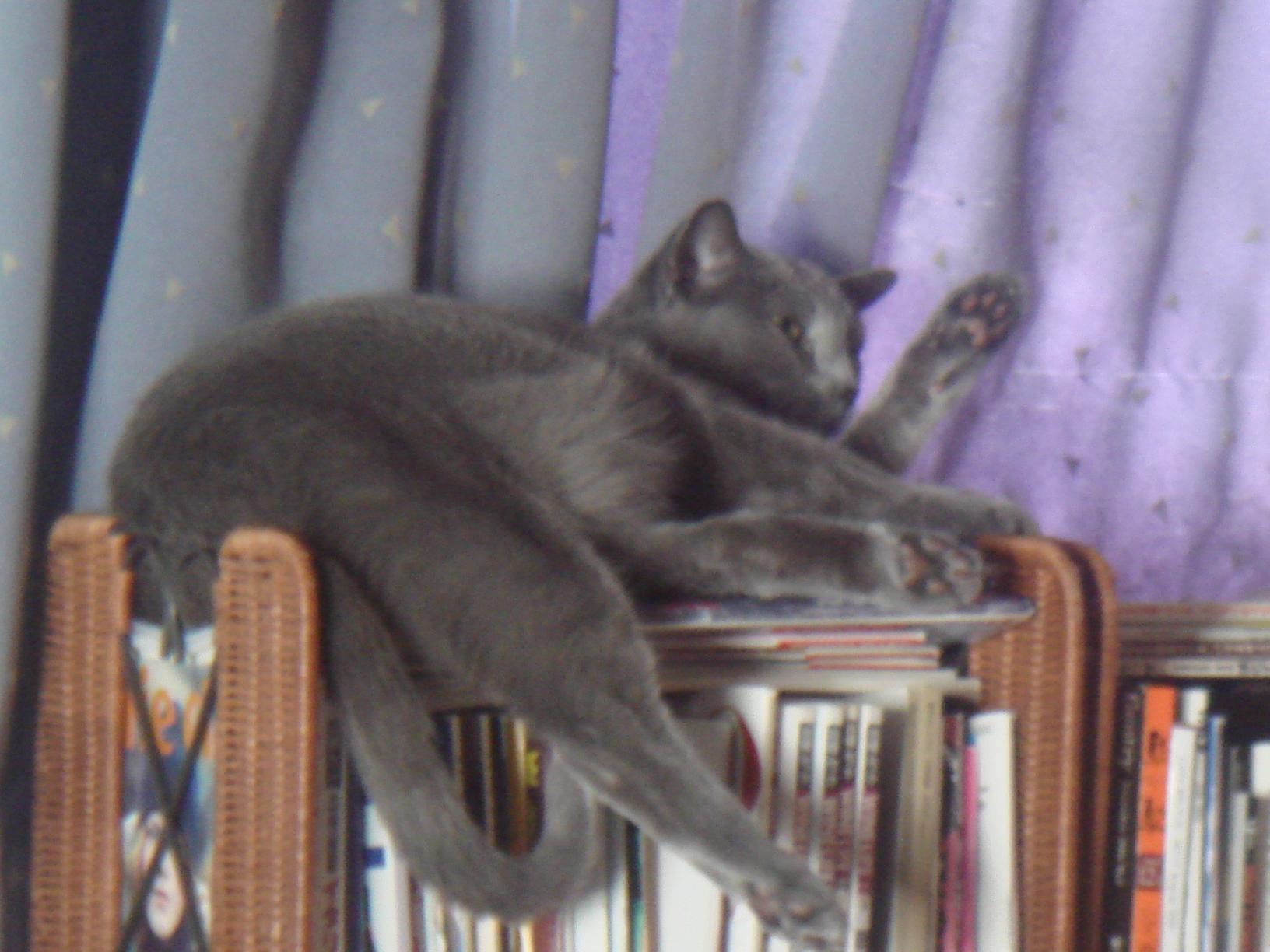 オープンラックの上で寝るデイジー