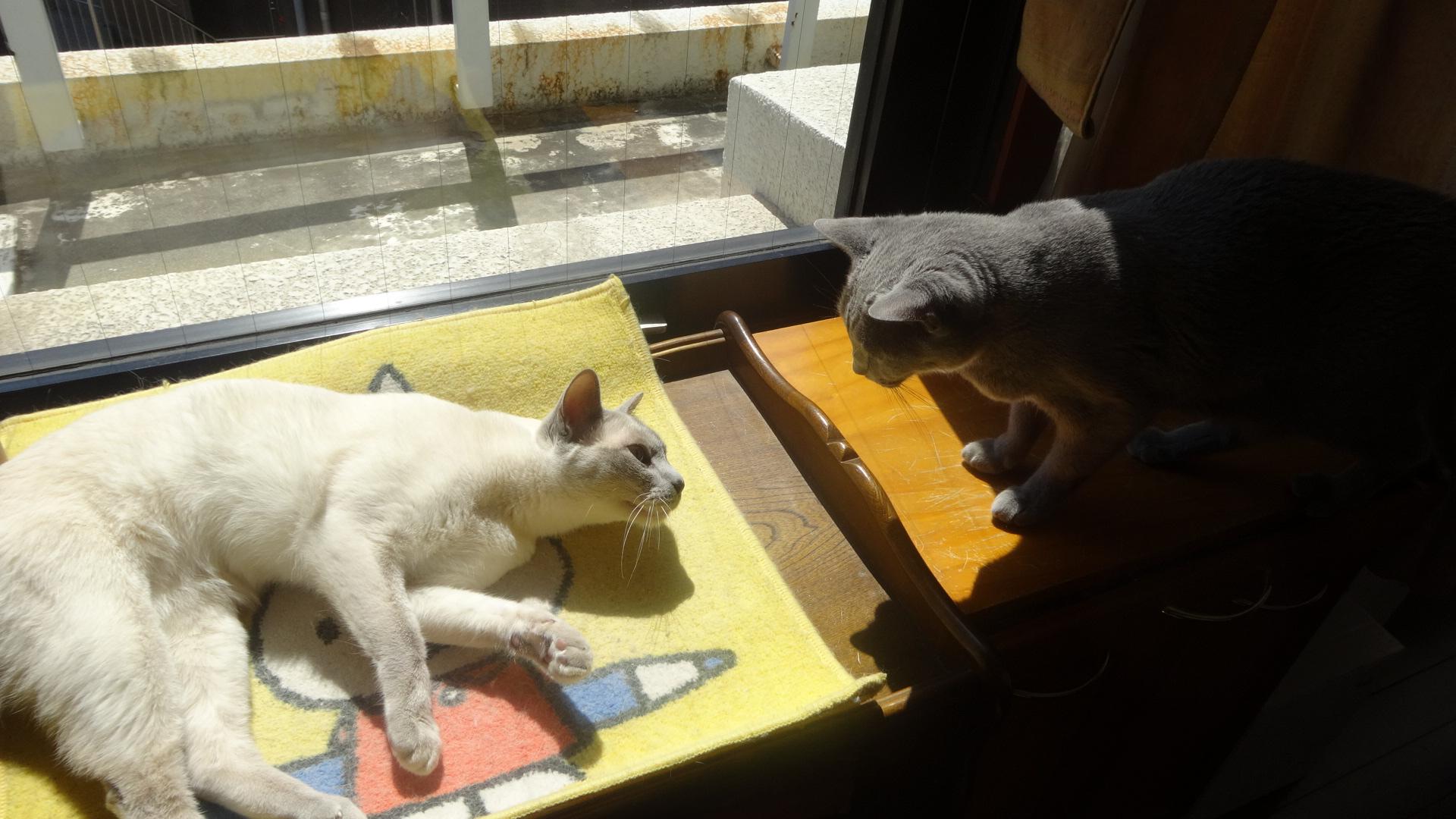 デイジーと楓の整理棚の上のとりあい