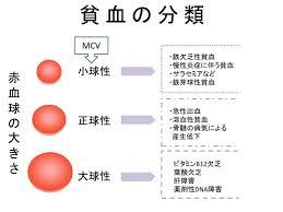 赤血球の大きさによる貧血の分類をまとめた図