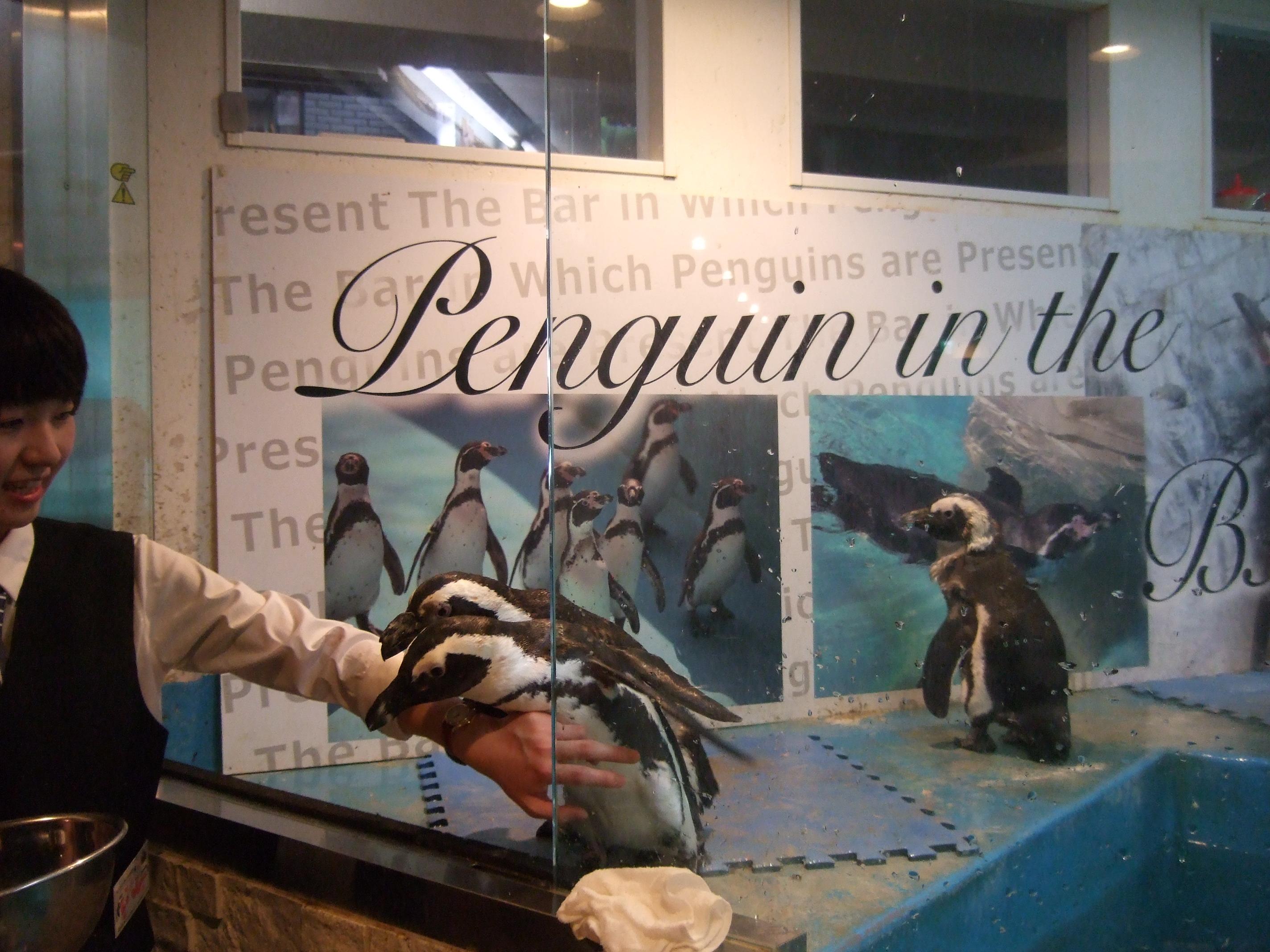 水槽から出てきそうな勢いのペンギン
