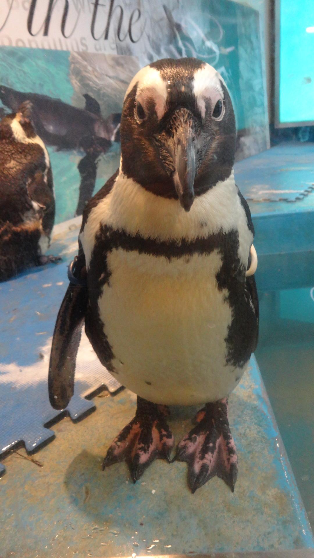 呼び止めるペンギン