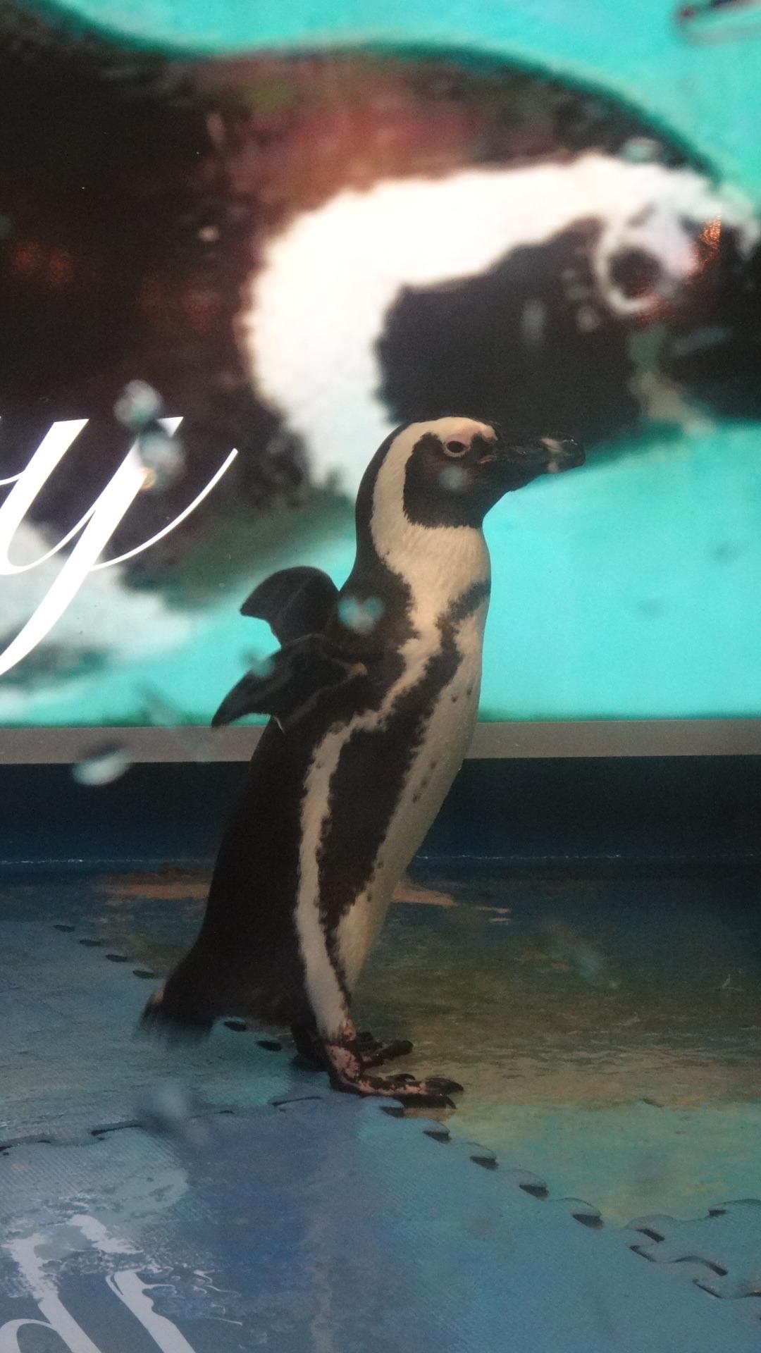 リラックスモードのペンギン