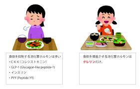 グレリンが唯一食欲促進作用を有することを示す図