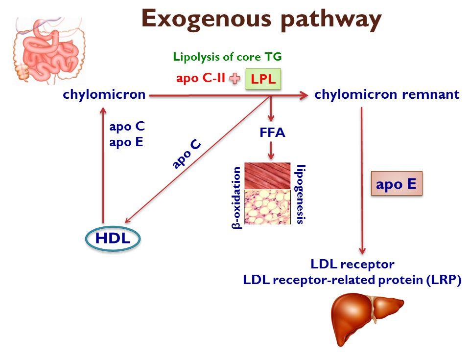 カイロミクロンのApo C-IIによるLPLの活性化と LPLによるカイロミクロンの分解を示した図