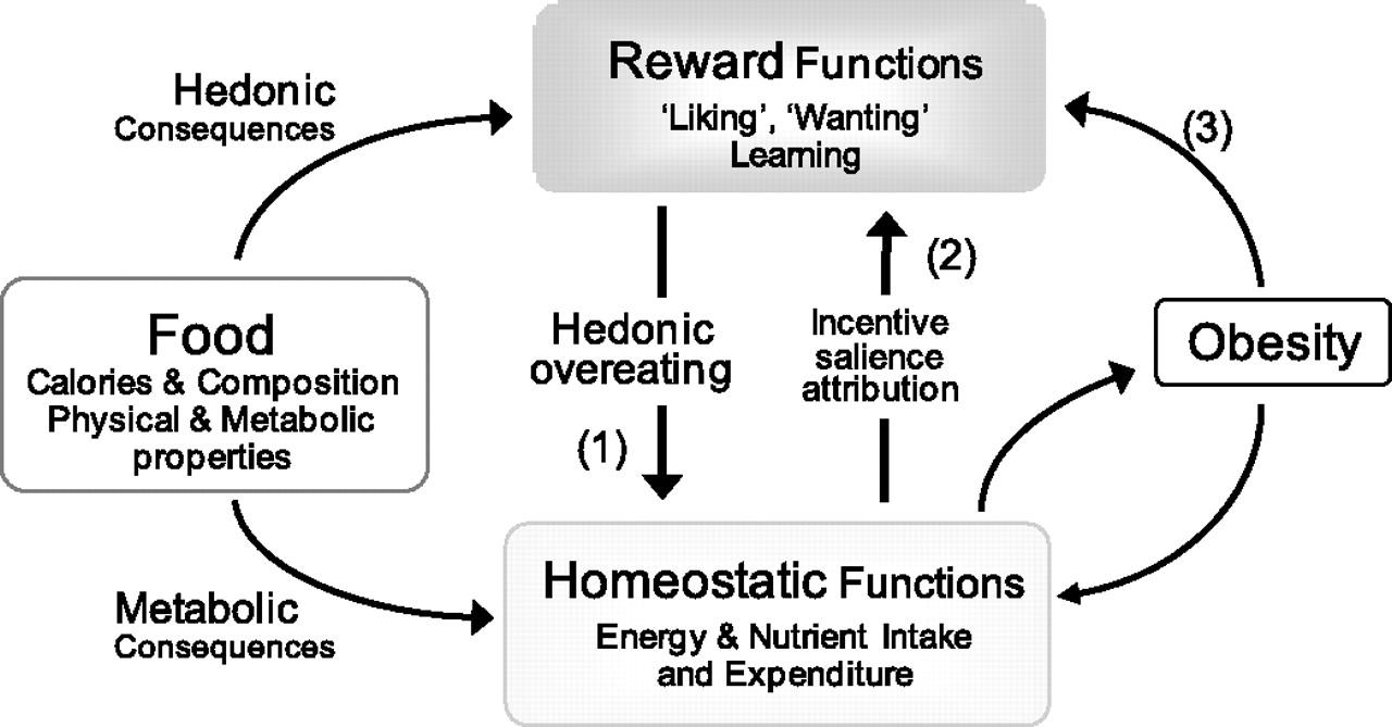 恒常性・メタボリックハンガー調節系の説明図