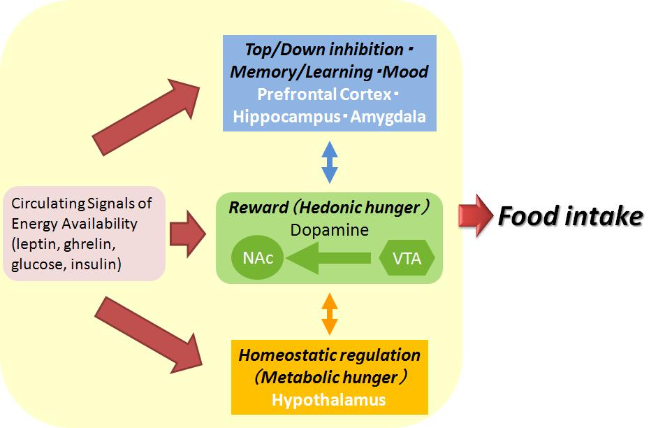 恒常性調節系 報酬系(快楽性)調節系の相互作用を説明する図