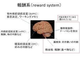 報酬系の説明図