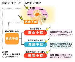 感覚系の食欲への影響を示す図