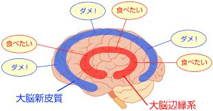 大脳皮質による食欲抑制を説明する図