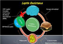レプチンが血液と脳を隔てる脳脊髄関門をうまく通過できない可能性を示す図